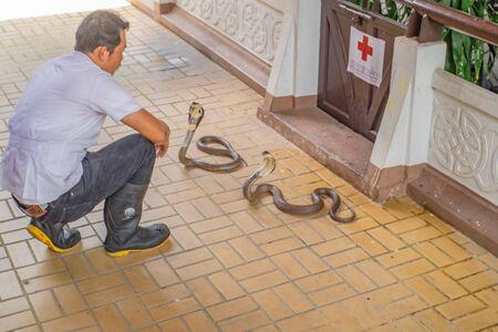 Bangkok / Tailandia- 7 de octubre de 2017; espectáculo de serpientes en la granja de serpientes de Tailandia, ciudad de Bangkok, Tailandia