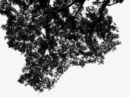 silhouette Tree on isolated background Standard-Bild - 134130267