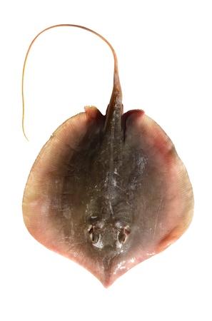 Ray, fish isolated on white background Stock Photo - 11465548