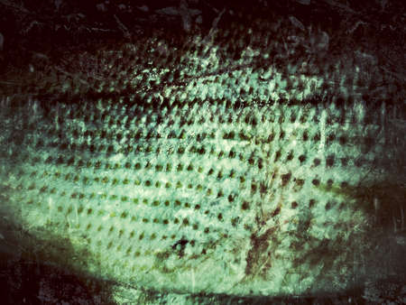 Old Fish Skin  Ideal for grunge background with space for text   Stock Photo - 18096428