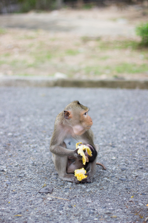 the monkey is eating banana and baby monkey is drinking milk  look very happy and feel good