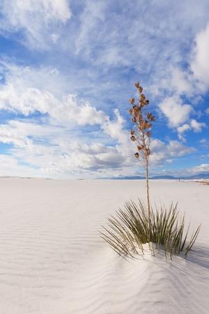 Yucca at White Sands National Monument 版權商用圖片