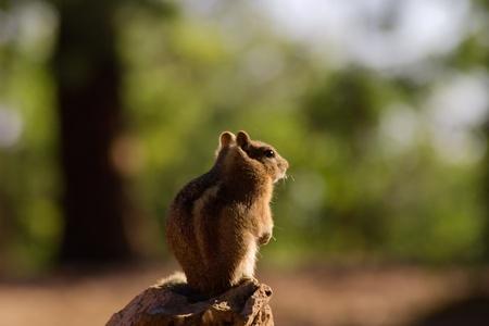 Squirrel at Grand Canyon North Rim photo