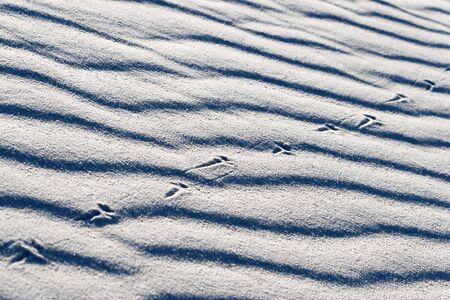 chihuahua desert: Lizard Tracks on White Sands