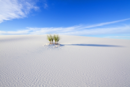 white sands national monument: Yucca at white Sands National Monument