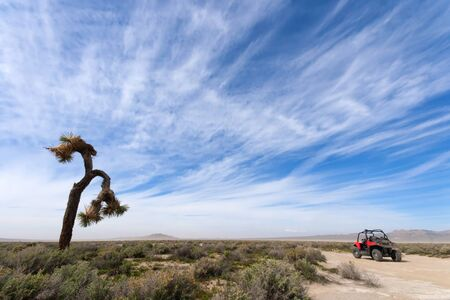 Off Road Vehicle and Joshua Tree Stock Photo - 18210446