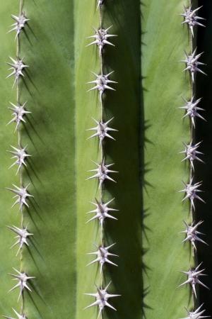 Prickly cactus close-up Stock Photo