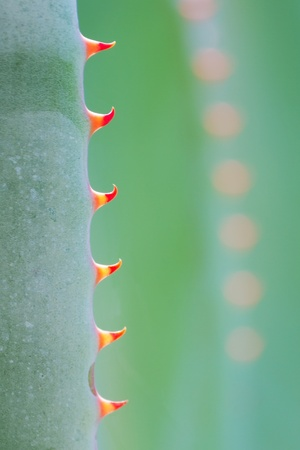 Fresh green cactus with red thorn.