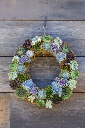 Colorful cactus weath hanging on rustic wooden wall.