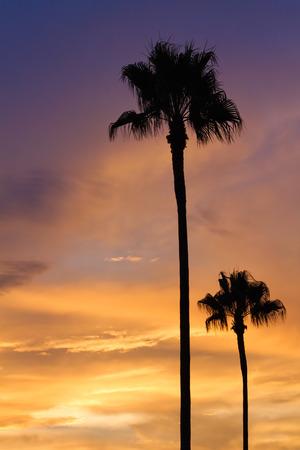 Palm tree silhouette in beautiful sunset, Orange county, California.