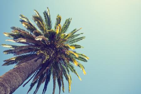 orange county: Palm tree in retro style, Orange county, California.