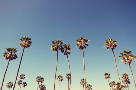 row: California palm trees in vintage style.