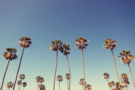 rows: California palmbomen in vintage stijl. Stockfoto
