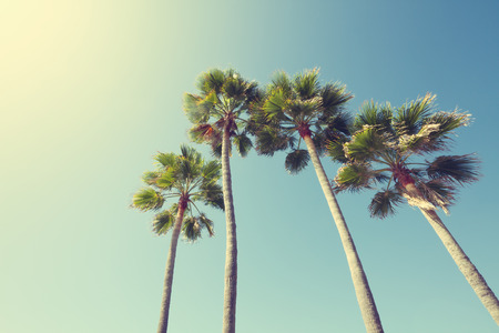 retro background: California palm trees in vintage style.