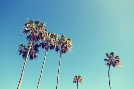 'palm trees': California palm trees in vintage style.