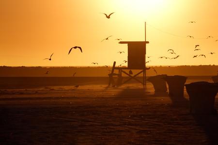 sea gull: Lifeguard Tower and Sea Gull in Sunset, Corona Del Mar Beach, California.