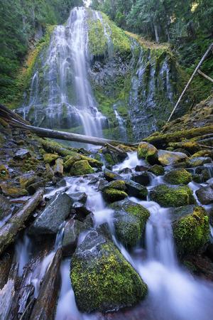 Lower Proxy Falls, Willamette National Forest, Oregon 版權商用圖片