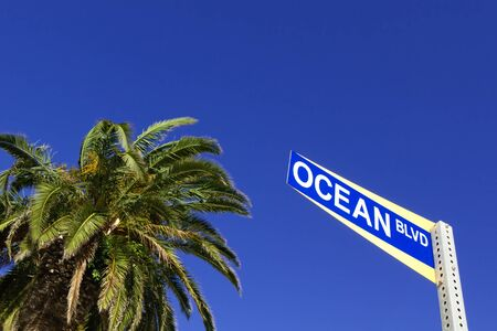 Palm tree and street sign of Ocean blvd