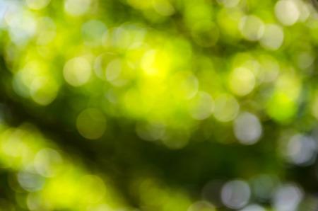 Beautiful green bokeh background.