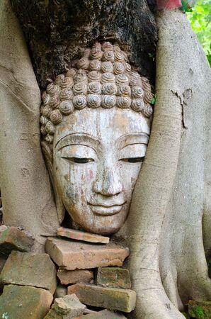 cabeza de buda: la cabeza de Buda en árbol