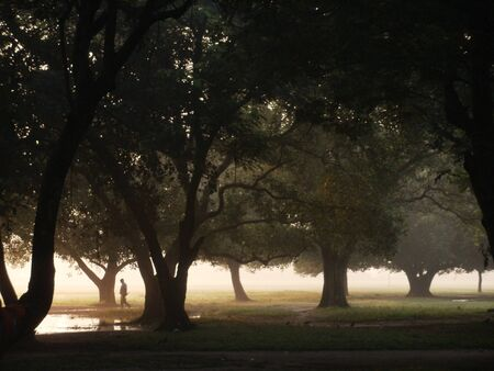 It is a morning picture full of fogs can be seen behind the trees