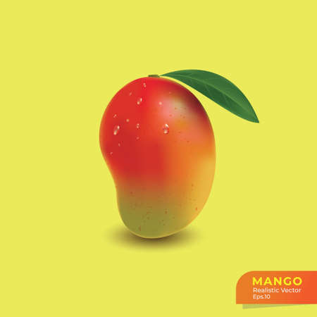 Mango realistic vector illustration, Fresh mandarin mango template, Tropical fruit graphic resources 写真素材 - 166338285
