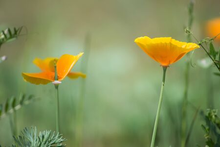 Two Beautiful Yellow Wildflowers
