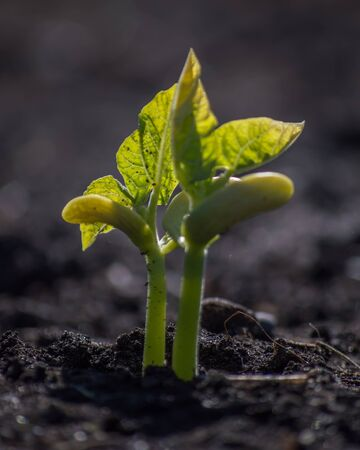 Plant Growing From Soil Stock Photo - 82602831
