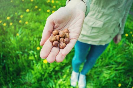 女の子の手持ち株ヘーゼル ナッツ。健康食品とナットについての記事をカラフルなイラスト。