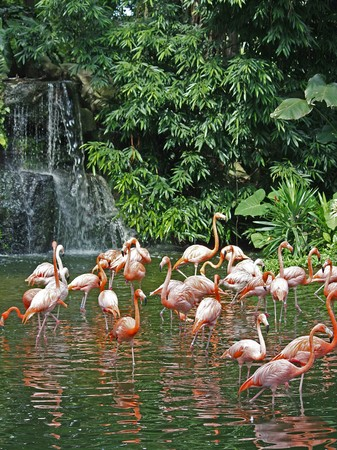 A flock of pink flamingos near a waterfall Stock Photo