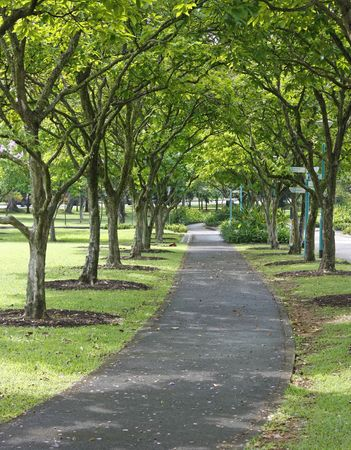 Shady park pavement with neat rows of trees on each side.
