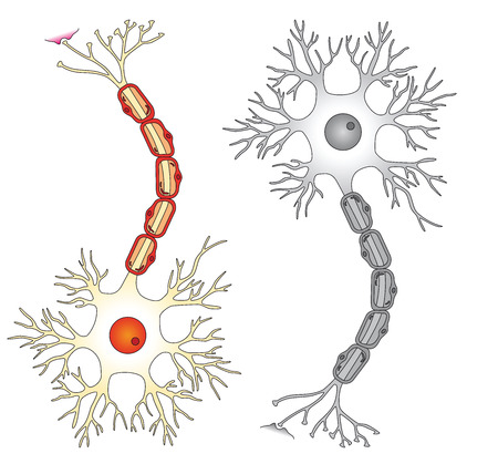 neuron: Neuron-Vektor-illustration
