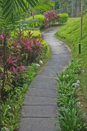 Gekromd pad in een tropische tuin Stockfoto