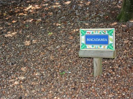 Macadamia nut shells on the ground under a Macadamia tree. Stock Photo