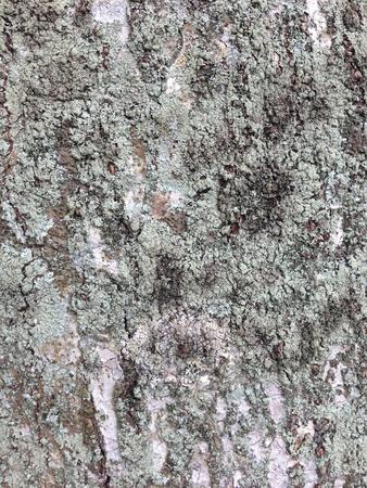 Ruwe textuur van een boom met een mos bedekte schors