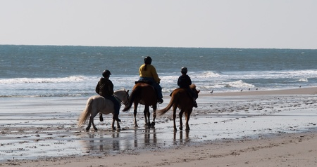 sea horse: Horseback riders take advantage of a bright sunny day along the beach in Myrtle Beach, South Carolina Stock Photo