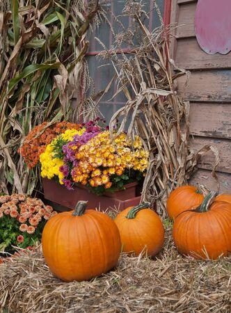 autumn motif: Pumpkins, corn stalks, and various fall flowers make up a perfect Autumn Motif.