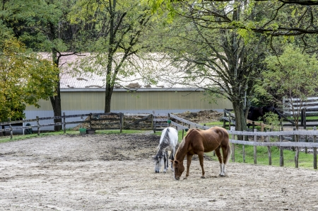 morsels: Corralled Horses search for early Spring morsels near Ballston Spa, New York
