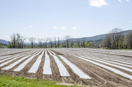 Planted crops and plastic protection make an attractive field pattern