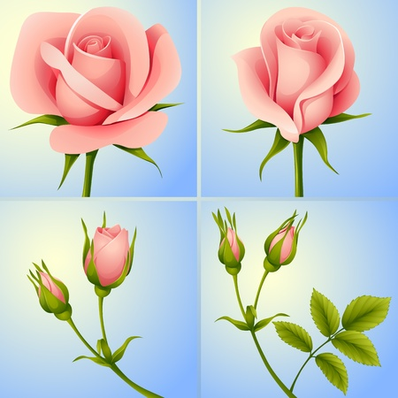 vector set of four pink roses on blue background Stok Fotoğraf - 10716444