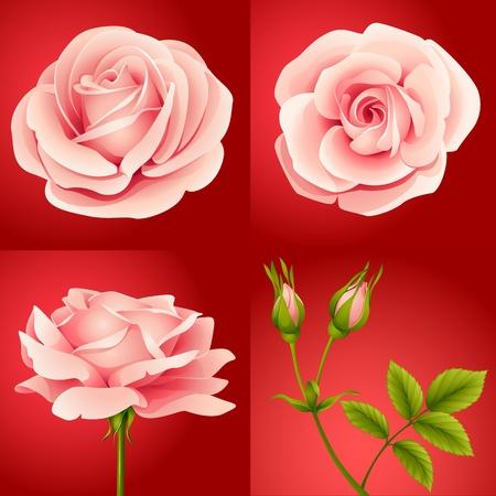 빨간색 배경에 네 핑크 장미의 벡터 설정