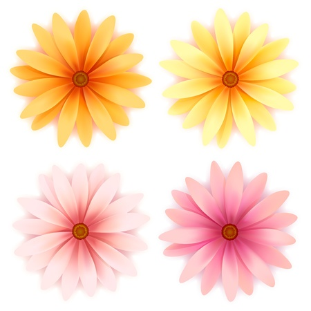 Vector set of four daisy flowers isolated on white Stock Vector - 12497685