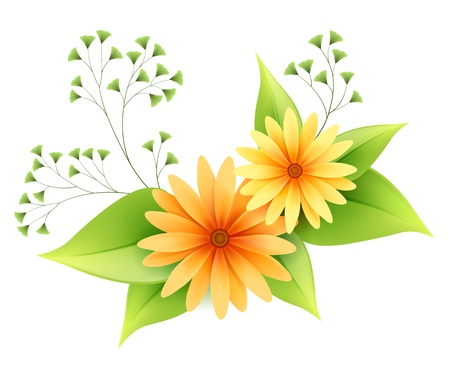 Vector daisy flowers with green foliage isolated on white