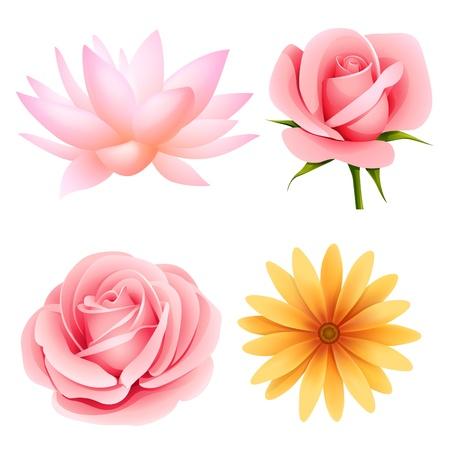 흰색 격리 된 장미, 연꽃, 데이지 세트 벡터 꽃 일러스트