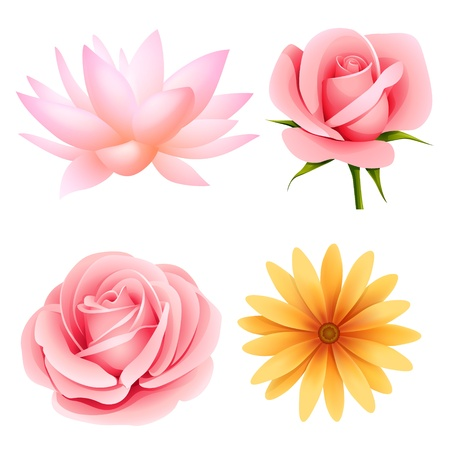 daisy pink: Vector flowers set of rose, lotus, daisy isolated on white