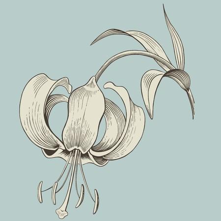 벡터 백합 꽃 조각 또는 잉크 드로잉 빈티지 일러스트