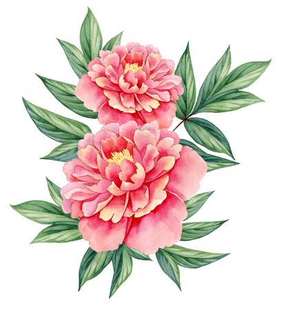 수채화 꽃 모란 핑크 그린 흰색 배경에 고립 장식 빈티지 그림 나뭇잎