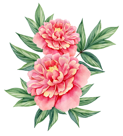 watercolor flower peony pink green leaves decorative vintage illustration isolated on white background Archivio Fotografico