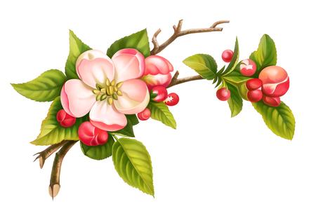 흰색 배경에 고립 된 핑크 화이트 빈티지 꽃 녹색 잎의 사과 꽃 지점 봄 꽃 세트. 디지털 수채화 그림.
