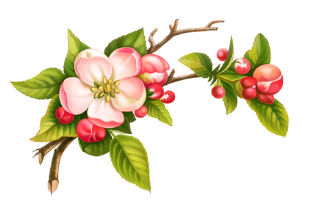 Apple blossom branch spring floral set of pink white vintage flowers green leaves isolated on white background. Digital watercolor illustration.